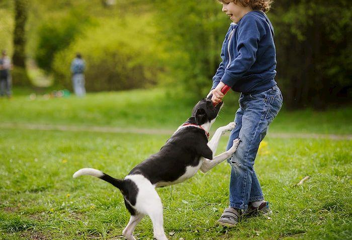 Mơ thấy chó cắn đánh con gì? Giải mã giấc mơ thấy chó cắn