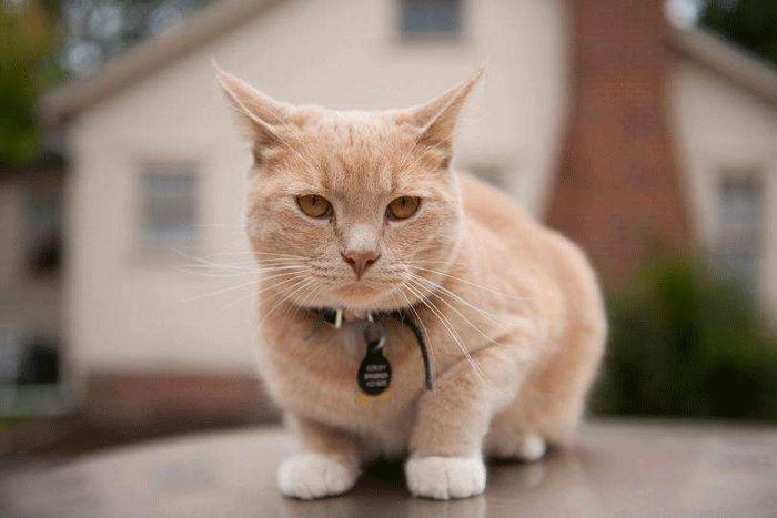 Giấc mơ thấy mèo đánh con gì chuẩn nhất?